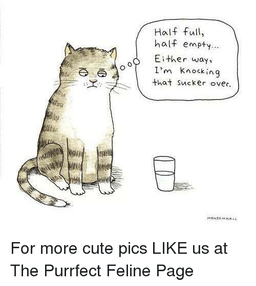 Memes, 🤖, and Feline: A o  Half full,  half empty...  Either way  I'm knocking  that sucker over.  MENDENHALL For more cute pics LIKE us at The Purrfect Feline Page