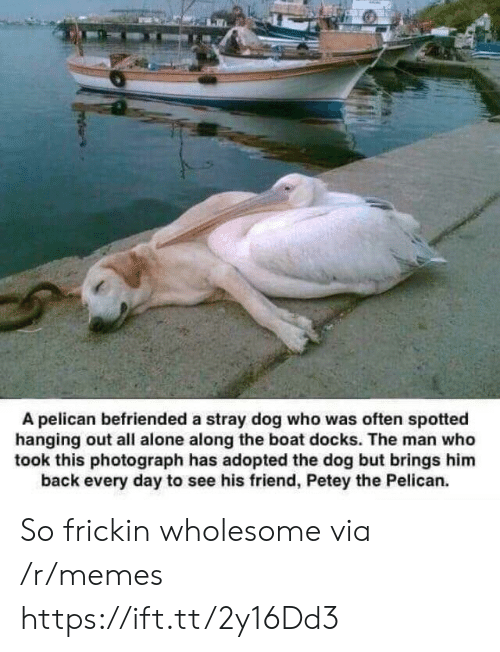 Photograph: A pelican befriended a stray dog who was often spotted  hanging out all alone along the boat docks. The man who  took this photograph has adopted the dog but brings him  back every day to see his friend, Petey the Pelican. So frickin wholesome via /r/memes https://ift.tt/2y16Dd3