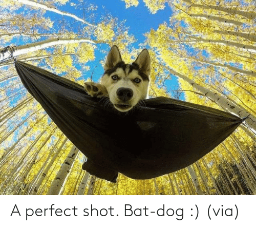Dog: A perfect shot. Bat-dog :) (via)