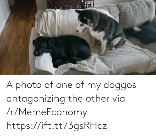 photo: A photo of one of my doggos antagonizing the other via /r/MemeEconomy https://ift.tt/3gsRHcz
