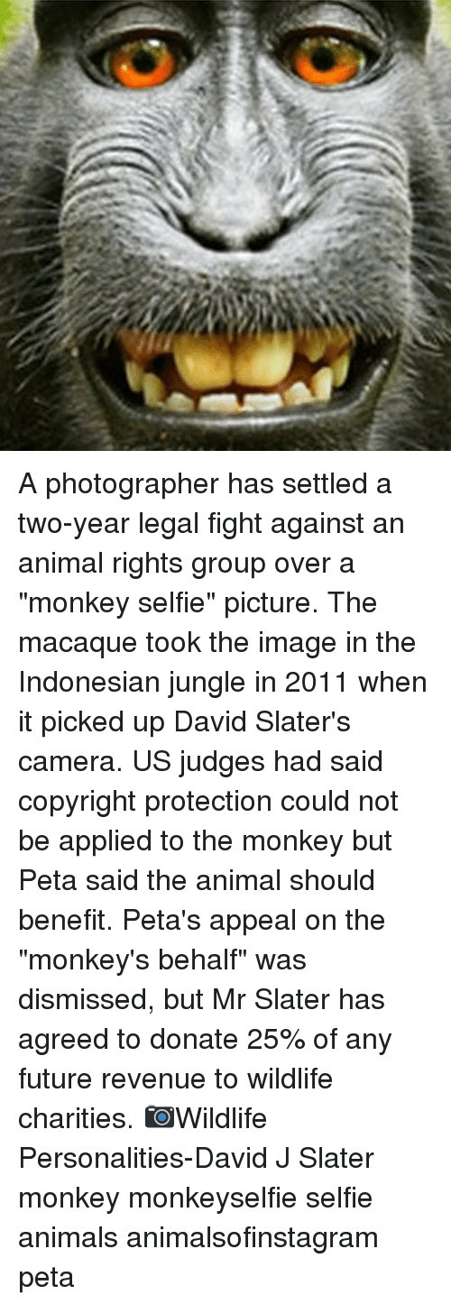 """fightings: A photographer has settled a two-year legal fight against an animal rights group over a """"monkey selfie"""" picture. The macaque took the image in the Indonesian jungle in 2011 when it picked up David Slater's camera. US judges had said copyright protection could not be applied to the monkey but Peta said the animal should benefit. Peta's appeal on the """"monkey's behalf"""" was dismissed, but Mr Slater has agreed to donate 25% of any future revenue to wildlife charities. 📷Wildlife Personalities-David J Slater monkey monkeyselfie selfie animals animalsofinstagram peta"""