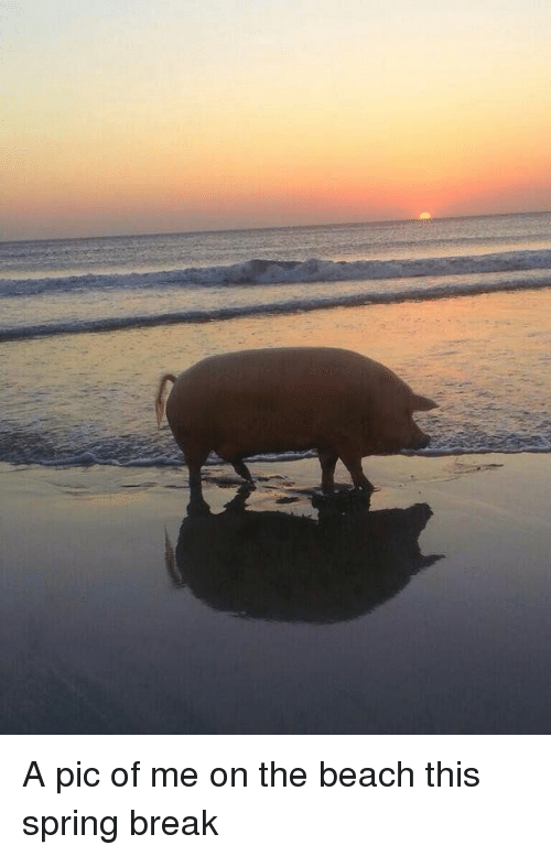 Spring Break, Girl Memes, and The Beach: A pic of me on the beach this spring break
