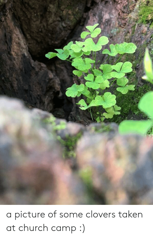 Church Camp: a picture of some clovers taken at church camp :)