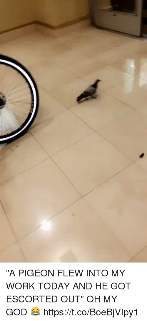 "Oh My Gods: ""A PIGEON FLEW INTO MY WORK TODAY AND HE GOT ESCORTED OUT"" OH MY GOD 😂 https://t.co/BoeBjVIpy1"