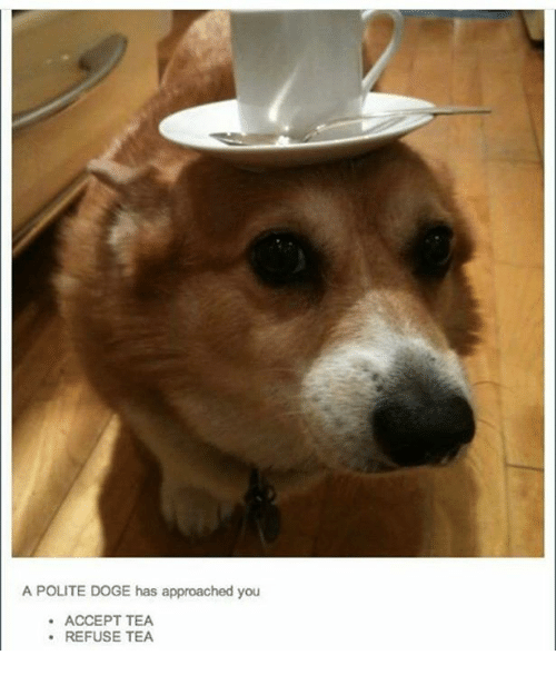 Dogee: A POLITE DOGE has approached you  ACCEPT TEA  REFUSE TEA