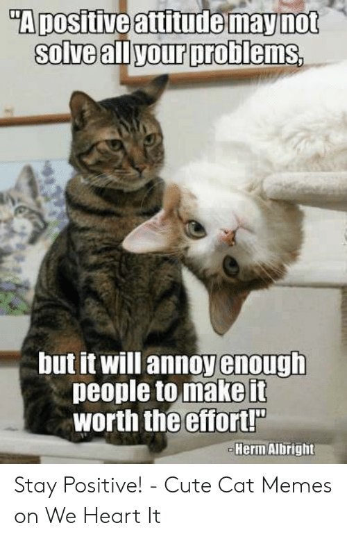 "Be Positive Meme: ""A positive attitude maynot  Solve allyour probiems.  but it will annoy enough  people to make it  worth the Gffort!  Herin Albrighit Stay Positive! - Cute Cat Memes on We Heart It"