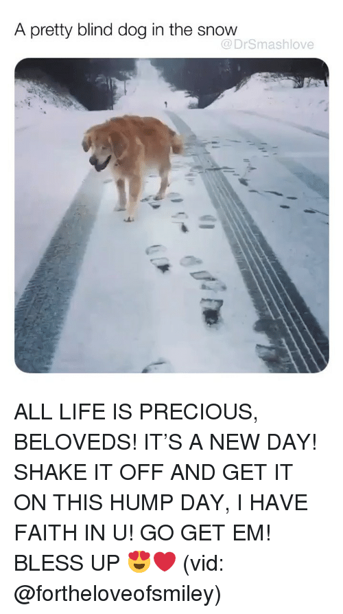 hump: A pretty blind dog in the snow  @DrSmashlove ALL LIFE IS PRECIOUS, BELOVEDS! IT'S A NEW DAY! SHAKE IT OFF AND GET IT ON THIS HUMP DAY, I HAVE FAITH IN U! GO GET EM! BLESS UP 😍❤️ (vid: @fortheloveofsmiley)