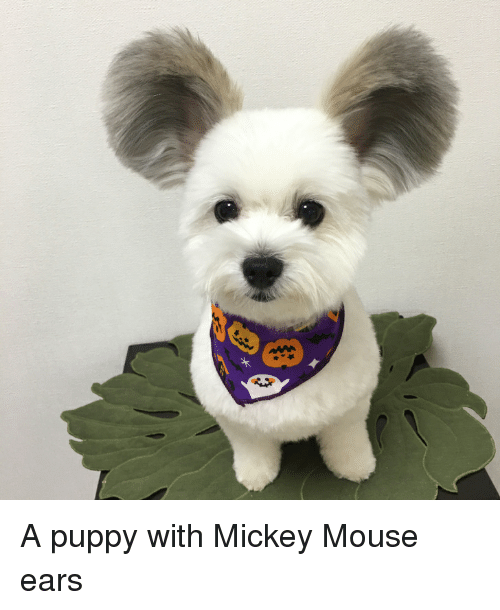 Mickey Mouse, Mouse, and Puppy