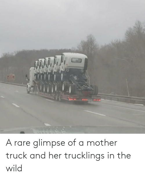 truck: A rare glimpse of a mother truck and her trucklings in the wild