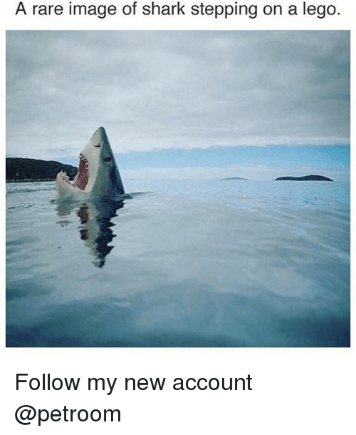 Funny, Lego, and Shark: A rare image of shark stepping on a lego. Follow my new account @petroom