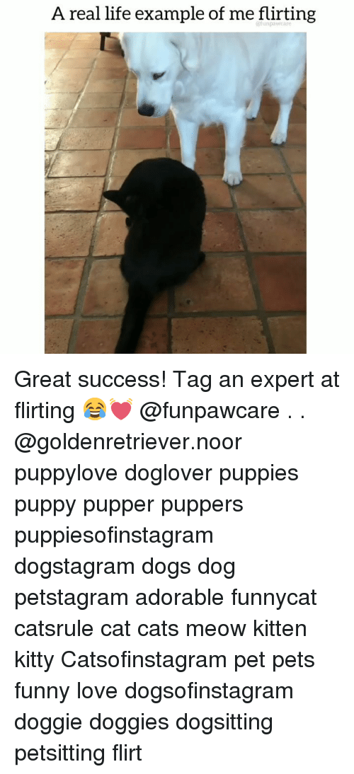 Cats, Dogs, and Funny: A real life example of me flirting  funpawcare Great success! Tag an expert at flirting 😂💓 @funpawcare . . @goldenretriever.noor puppylove doglover puppies puppy pupper puppers puppiesofinstagram dogstagram dogs dog petstagram adorable funnycat catsrule cat cats meow kitten kitty Catsofinstagram pet pets funny love dogsofinstagram doggie doggies dogsitting petsitting flirt