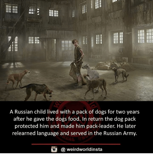 Dogs, Food, and Memes: A Russian child lived with a pack of dogs for two years  after he gave the dogs food. In return the dog pack  protected him and made him pack-leader. He later  relearned language and served in the Russian Army.  @ weirdworldinsta