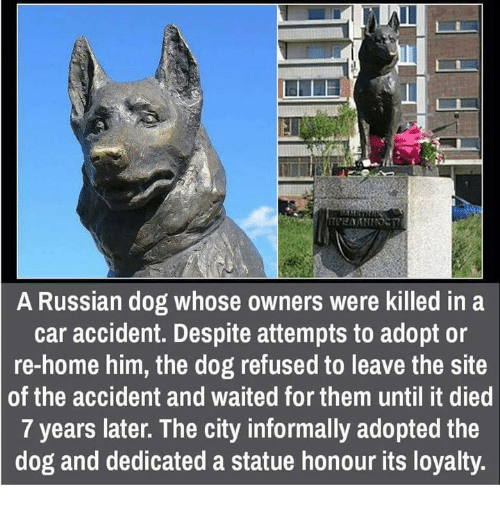 Cars, Memes, and Russian: A Russian dog whose owners were killed in a  car accident. Despite attempts to adopt or  re-home him, the dog refused to leave the site  of the accident and waited for them until it died  7 years later. The city informally adopted the  dog and dedicated a statue honour its loyalty.