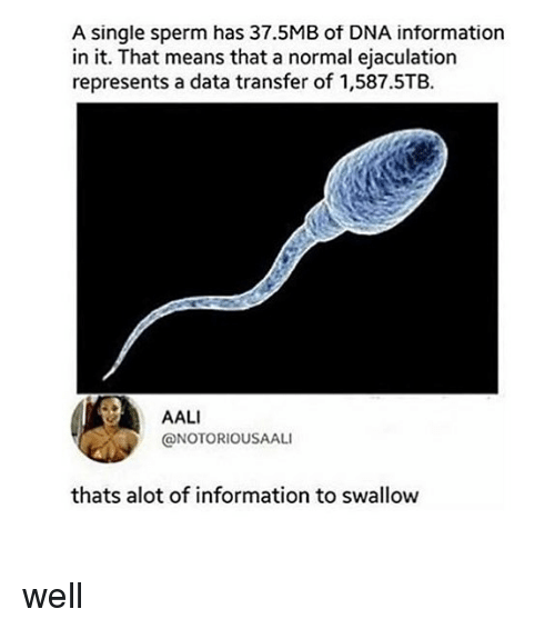 Memes, Information, and Single: A single sperm has 37.5MB of DNA information  in it. That means that a normal ejaculation  represents a data transfer of 1,587.5TB.  AALI  @NOTORIOUSAALI  thats alot of information to swallow well
