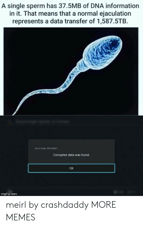 sperm: A single sperm has 37.5MB of DNA information  in it. That means that a normal ejaculation  represents a data transfer of 1,587.5TB  Error Code 2016-0601  Corrupted data was found.  OK  imgflip.com meirl by crashdaddy MORE MEMES