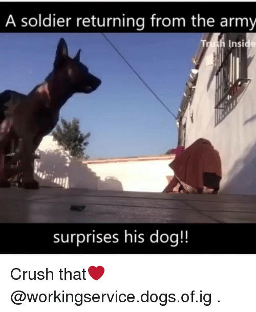 Crush, Dogs, and Memes: A soldier returning from the army  hInside  surprises his dog!! Crush that❤️ @workingservice.dogs.of.ig .