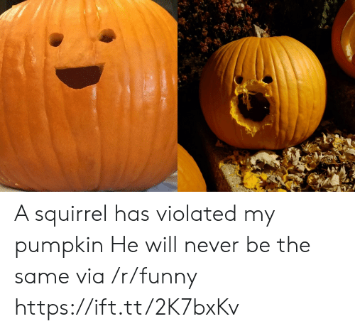 violated: A squirrel has violated my pumpkin He will never be the same via /r/funny https://ift.tt/2K7bxKv