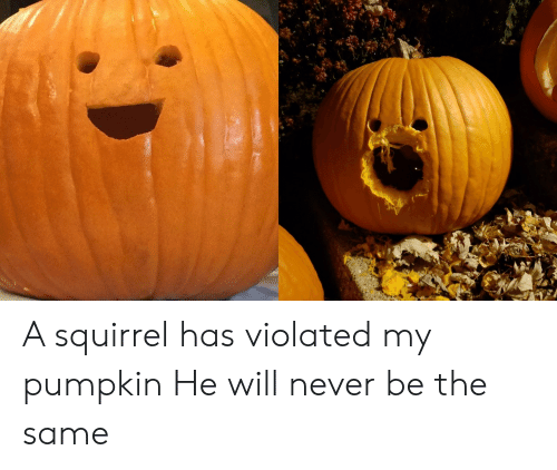 violated: A squirrel has violated my pumpkin He will never be the same