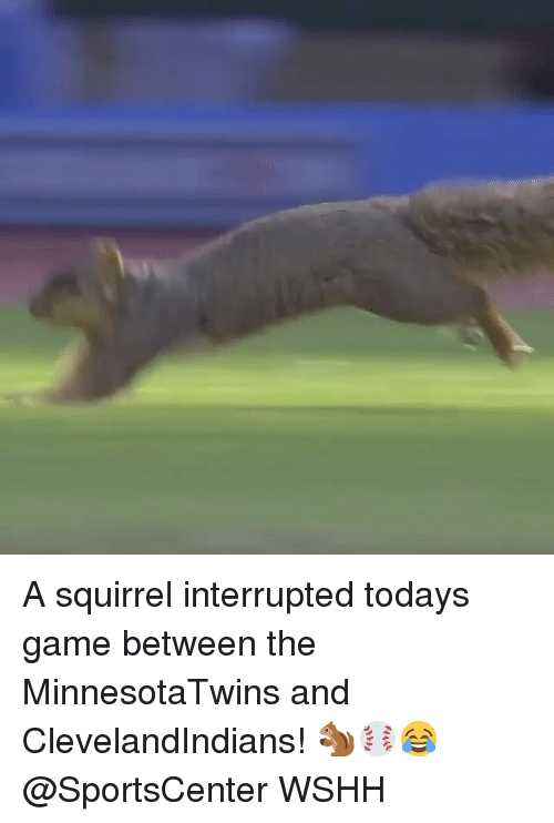 Memes, SportsCenter, and Wshh: A squirrel interrupted todays game between the MinnesotaTwins and ClevelandIndians! 🐿⚾️😂 @SportsCenter WSHH
