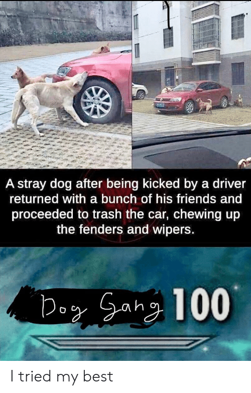 chewing: A stray dog after being kicked by a driver  returned with a bunch of his friends and  proceeded to trash the car, chewing up  the fenders and wipers I tried my best
