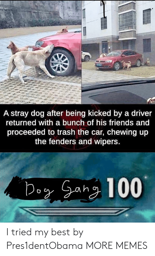 chewing: A stray dog after being kicked by a driver  returned with a bunch of his friends and  proceeded to trash the car, chewing up  the fenders and wipers I tried my best by Pres1dentObama MORE MEMES