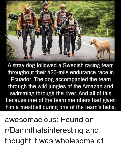 endurance: A stray dog followed a Swedish racing team  throughout their 430-mile endurance race in  Ecuador. The dog accompanied the team  through the wild jungles of the Amazon and  swimming through the river. And all of this  because one of the team members had given  him a meatball during one of the team's halts. awesomacious:  Found on r/Damnthatsinteresting and thought it was wholesome af