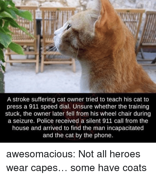 seizure: A stroke suffering cat owner tried to teach his cat to  press a 911 speed dial. Unsure whether the training  stuck, the owner later fell from his wheel chair during  a seizure. Police received a silent 911 call from the  house and arrived to find the man incapacitated  and the cat by the phone. awesomacious:  Not all heroes wear capes… some have coats
