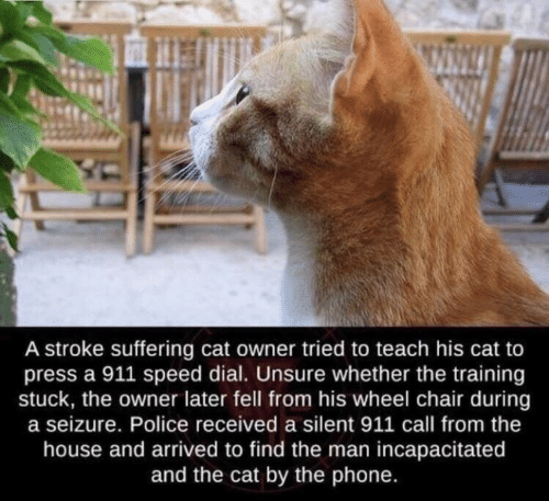 seizure: A stroke suffering cat owner tried to teach his cat to  press a 911 speed dial. Unsure whether the training  stuck, the owner later fell from his wheel chair during  a seizure. Police received a silent 911 call from the  house and arrived to find the man incapacitated  and the cat by the phone.