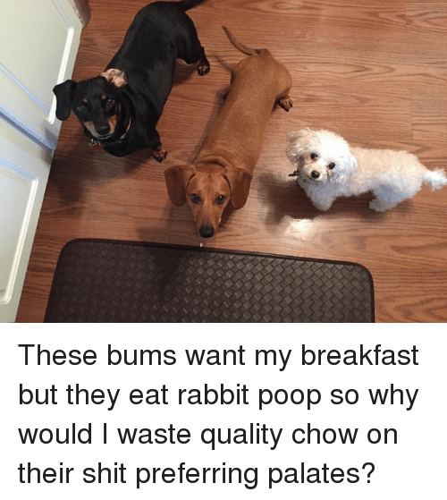 palatable: (A These bums want my breakfast but they eat rabbit poop so why would I waste quality chow on their shit preferring palates?
