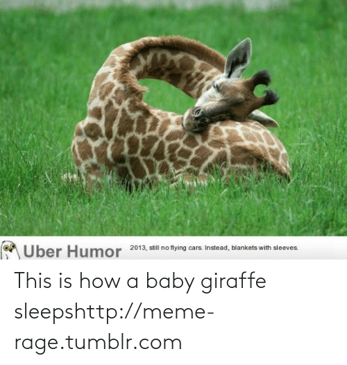 baby giraffe: A Uber Humor  2013, still no flying cars. Instead, blankets with sleeves. This is how a baby giraffe sleepshttp://meme-rage.tumblr.com