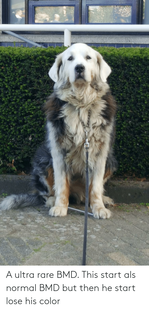 But Then: A ultra rare BMD. This start als normal BMD but then he start lose his color