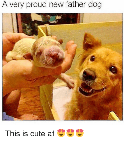 Af, Cute, and Funny: A Very proud new father dog This is cute af 😍😍😍