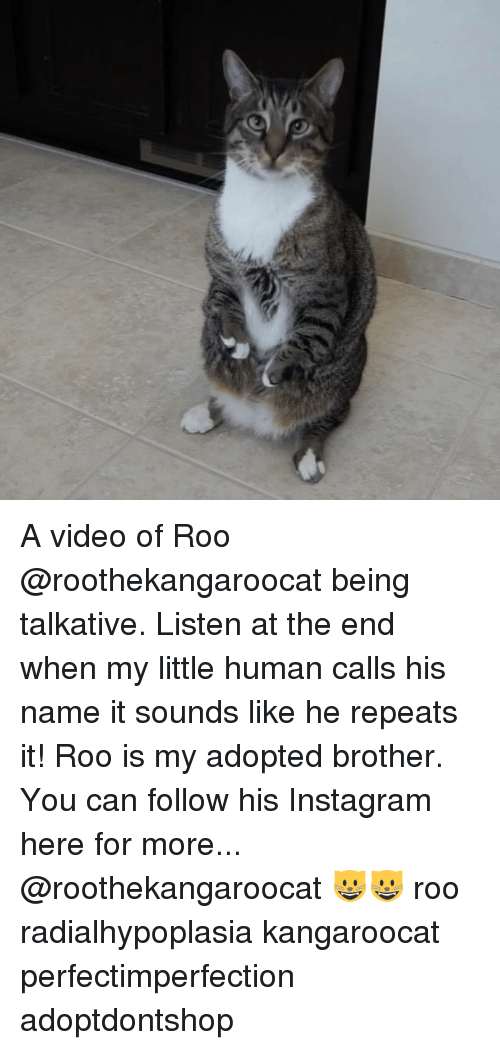 Video: A video of Roo @roothekangaroocat being talkative. Listen at the end when my little human calls his name it sounds like he repeats it! Roo is my adopted brother. You can follow his Instagram here for more... @roothekangaroocat 😺😺 roo radialhypoplasia kangaroocat perfectimperfection adoptdontshop