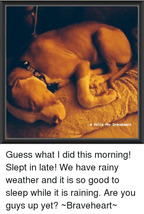 Good Morning Did You Sleep Well In French : Best memes about rainy weather