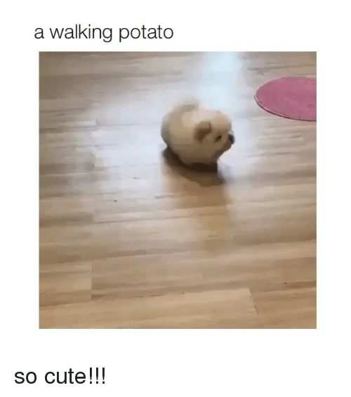 Cute, Potato, and Girl Memes: a walking potato so cute!!!