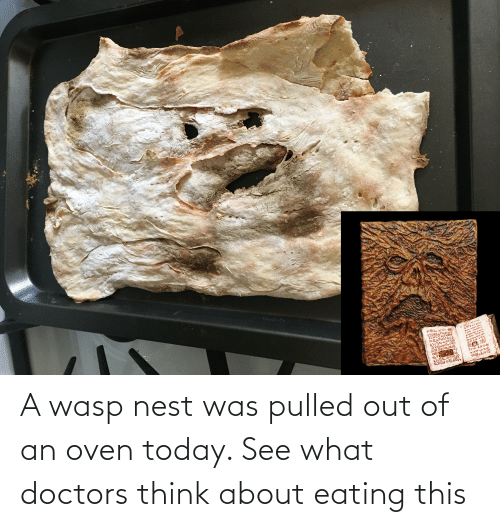 wasp nest: A wasp nest was pulled out of an oven today. See what doctors think about eating this