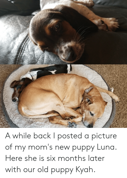 Moms, Puppy, and Old: A while back I posted a picture of my mom's new puppy Luna. Here she is six months later with our old puppy Kyah.