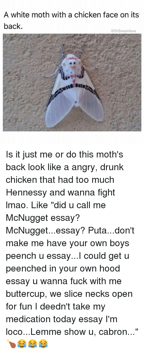 """Cabrons: A white moth with a chicken face on its  back  @DrSmashlove Is it just me or do this moth's back look like a angry, drunk chicken that had too much Hennessy and wanna fight lmao. Like """"did u call me McNugget essay? McNugget...essay? Puta...don't make me have your own boys peench u essay...I could get u peenched in your own hood essay u wanna fuck with me buttercup, we slice necks open for fun I deedn't take my medication today essay I'm loco...Lemme show u, cabron..."""" 🍗😂😂😂"""