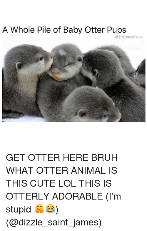 Otterly: A Whole Pile of Baby Otter Pups  DrSmashlove  (a GET OTTER HERE BRUH WHAT OTTER ANIMAL IS THIS CUTE LOL THIS IS OTTERLY ADORABLE (I'm stupid 🤗😂) (@dizzle_saint_james)