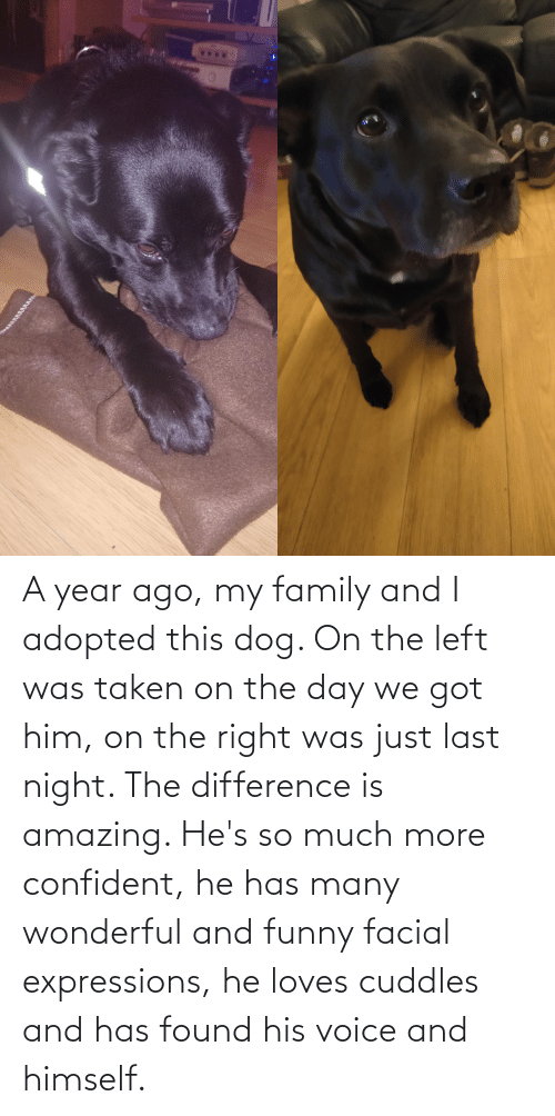 Expressions: A year ago, my family and I adopted this dog. On the left was taken on the day we got him, on the right was just last night. The difference is amazing. He's so much more confident, he has many wonderful and funny facial expressions, he loves cuddles and has found his voice and himself.