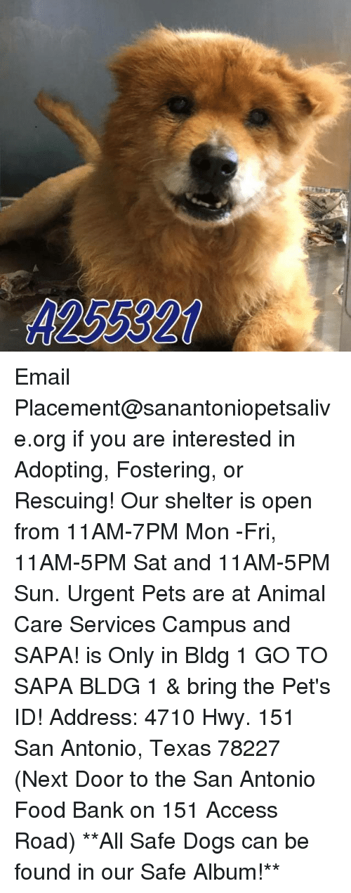 Memes, 🤖, and Sun: A25 3320 Email Placement@sanantoniopetsalive.org if you are interested in Adopting, Fostering, or Rescuing!  Our shelter is open from 11AM-7PM Mon -Fri, 11AM-5PM Sat and 11AM-5PM Sun.  Urgent Pets are at Animal Care Services Campus and SAPA! is Only in Bldg 1 GO TO SAPA BLDG 1 & bring the Pet's ID! Address: 4710 Hwy. 151 San Antonio, Texas 78227 (Next Door to the San Antonio Food Bank on 151 Access Road)  **All Safe Dogs can be found in our Safe Album!**