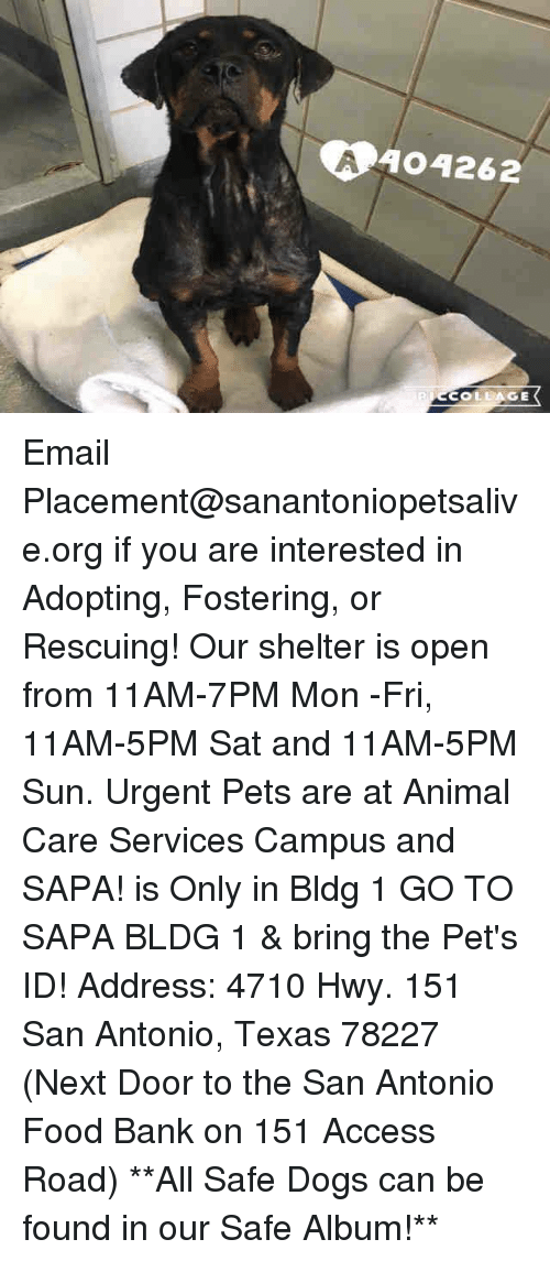 Texas: A404262  COLLAGE Email Placement@sanantoniopetsalive.org if you are interested in Adopting, Fostering, or Rescuing!  Our shelter is open from 11AM-7PM Mon -Fri, 11AM-5PM Sat and 11AM-5PM Sun.  Urgent Pets are at Animal Care Services Campus and SAPA! is Only in Bldg 1 GO TO SAPA BLDG 1 & bring the Pet's ID! Address: 4710 Hwy. 151 San Antonio, Texas 78227 (Next Door to the San Antonio Food Bank on 151 Access Road)  **All Safe Dogs can be found in our Safe Album!**