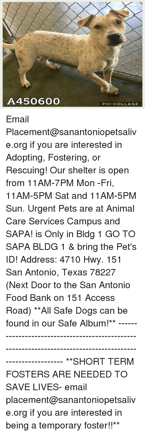 Dogs, Food, and Memes: A450600  PIC.COLLAGE Email Placement@sanantoniopetsalive.org if you are interested in Adopting, Fostering, or Rescuing!  Our shelter is open from 11AM-7PM Mon -Fri, 11AM-5PM Sat and 11AM-5PM Sun.  Urgent Pets are at Animal Care Services Campus and SAPA! is Only in Bldg 1 GO TO SAPA BLDG 1 & bring the Pet's ID! Address: 4710 Hwy. 151 San Antonio, Texas 78227 (Next Door to the San Antonio Food Bank on 151 Access Road)  **All Safe Dogs can be found in our Safe Album!** ---------------------------------------------------------------------------------------------------------- **SHORT TERM FOSTERS ARE NEEDED TO SAVE LIVES- email placement@sanantoniopetsalive.org if you are interested in being a temporary foster!!**