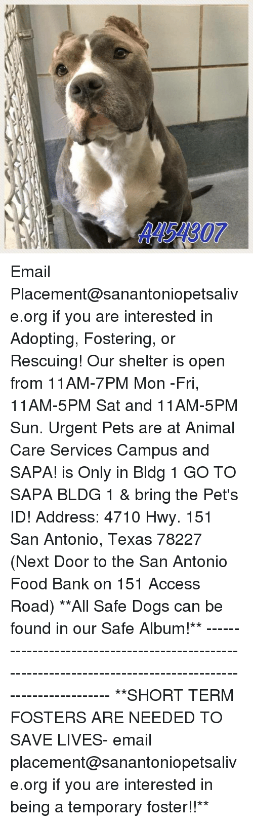 Dogs, Food, and Memes: A454307 Email Placement@sanantoniopetsalive.org if you are interested in Adopting, Fostering, or Rescuing!  Our shelter is open from 11AM-7PM Mon -Fri, 11AM-5PM Sat and 11AM-5PM Sun.  Urgent Pets are at Animal Care Services Campus and SAPA! is Only in Bldg 1 GO TO SAPA BLDG 1 & bring the Pet's ID! Address: 4710 Hwy. 151 San Antonio, Texas 78227 (Next Door to the San Antonio Food Bank on 151 Access Road)  **All Safe Dogs can be found in our Safe Album!** ---------------------------------------------------------------------------------------------------------- **SHORT TERM FOSTERS ARE NEEDED TO SAVE LIVES- email placement@sanantoniopetsalive.org if you are interested in being a temporary foster!!**