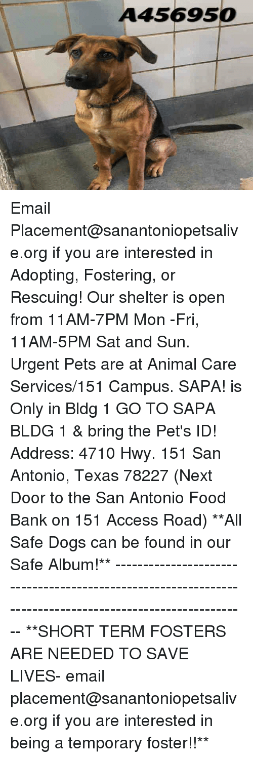 Dogs, Food, and Memes: A456950 Email Placement@sanantoniopetsalive.org if you are interested in Adopting, Fostering, or Rescuing!  Our shelter is open from 11AM-7PM Mon -Fri, 11AM-5PM Sat and Sun.  Urgent Pets are at Animal Care Services/151 Campus. SAPA! is Only in Bldg 1 GO TO SAPA BLDG 1 & bring the Pet's ID! Address: 4710 Hwy. 151 San Antonio, Texas 78227 (Next Door to the San Antonio Food Bank on 151 Access Road)  **All Safe Dogs can be found in our Safe Album!** ---------------------------------------------------------------------------------------------------------- **SHORT TERM FOSTERS ARE NEEDED TO SAVE LIVES- email placement@sanantoniopetsalive.org if you are interested in being a temporary foster!!**