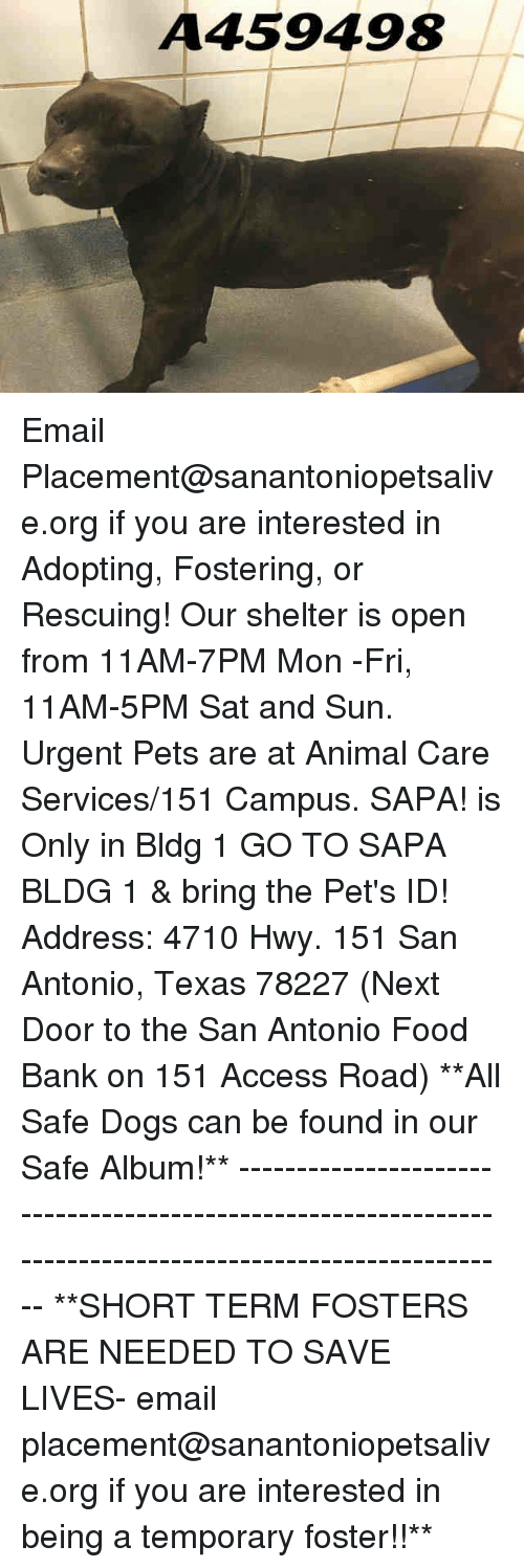 Dogs, Food, and Memes: A459498 Email Placement@sanantoniopetsalive.org if you are interested in Adopting, Fostering, or Rescuing!  Our shelter is open from 11AM-7PM Mon -Fri, 11AM-5PM Sat and Sun.  Urgent Pets are at Animal Care Services/151 Campus. SAPA! is Only in Bldg 1 GO TO SAPA BLDG 1 & bring the Pet's ID! Address: 4710 Hwy. 151 San Antonio, Texas 78227 (Next Door to the San Antonio Food Bank on 151 Access Road)  **All Safe Dogs can be found in our Safe Album!** ---------------------------------------------------------------------------------------------------------- **SHORT TERM FOSTERS ARE NEEDED TO SAVE LIVES- email placement@sanantoniopetsalive.org if you are interested in being a temporary foster!!**