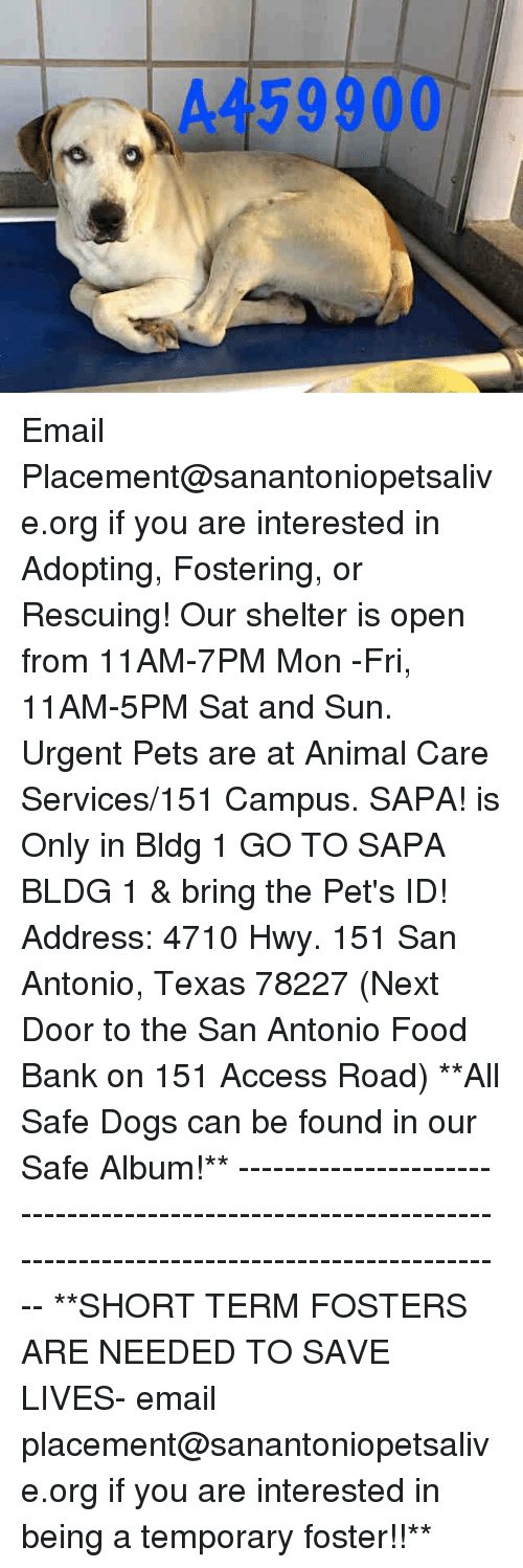 Dogs, Food, and Memes: A459900 Email Placement@sanantoniopetsalive.org if you are interested in Adopting, Fostering, or Rescuing!  Our shelter is open from 11AM-7PM Mon -Fri, 11AM-5PM Sat and Sun.  Urgent Pets are at Animal Care Services/151 Campus. SAPA! is Only in Bldg 1 GO TO SAPA BLDG 1 & bring the Pet's ID! Address: 4710 Hwy. 151 San Antonio, Texas 78227 (Next Door to the San Antonio Food Bank on 151 Access Road)  **All Safe Dogs can be found in our Safe Album!** ---------------------------------------------------------------------------------------------------------- **SHORT TERM FOSTERS ARE NEEDED TO SAVE LIVES- email placement@sanantoniopetsalive.org if you are interested in being a temporary foster!!**