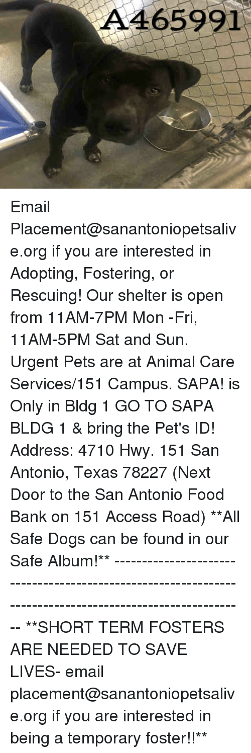 Dogs, Food, and Memes: A465991 Email Placement@sanantoniopetsalive.org if you are interested in Adopting, Fostering, or Rescuing!  Our shelter is open from 11AM-7PM Mon -Fri, 11AM-5PM Sat and Sun.  Urgent Pets are at Animal Care Services/151 Campus. SAPA! is Only in Bldg 1 GO TO SAPA BLDG 1 & bring the Pet's ID! Address: 4710 Hwy. 151 San Antonio, Texas 78227 (Next Door to the San Antonio Food Bank on 151 Access Road)  **All Safe Dogs can be found in our Safe Album!** ---------------------------------------------------------------------------------------------------------- **SHORT TERM FOSTERS ARE NEEDED TO SAVE LIVES- email placement@sanantoniopetsalive.org if you are interested in being a temporary foster!!**