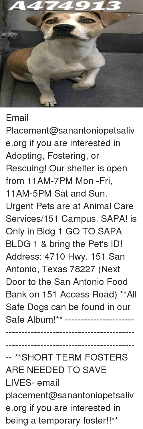 Dogs, Food, and Memes: A474913 Email Placement@sanantoniopetsalive.org if you are interested in Adopting, Fostering, or Rescuing!  Our shelter is open from 11AM-7PM Mon -Fri, 11AM-5PM Sat and Sun.  Urgent Pets are at Animal Care Services/151 Campus. SAPA! is Only in Bldg 1 GO TO SAPA BLDG 1 & bring the Pet's ID! Address: 4710 Hwy. 151 San Antonio, Texas 78227 (Next Door to the San Antonio Food Bank on 151 Access Road)  **All Safe Dogs can be found in our Safe Album!** ---------------------------------------------------------------------------------------------------------- **SHORT TERM FOSTERS ARE NEEDED TO SAVE LIVES- email placement@sanantoniopetsalive.org if you are interested in being a temporary foster!!**