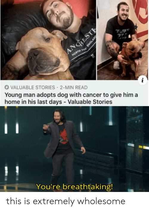 Cancer: AA,  AB  ANGESTE  NORTH S  VALUABLE STORIES 2-MIN READ  Young man adopts dog with cancer to give him a  home in his last days - Valuable Stories  You're breathtaking!  ENGLAND this is extremely wholesome